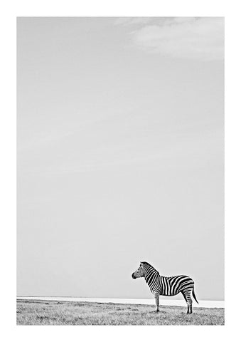 Zebra (black & white)