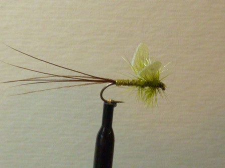 Winged Olive Mayfly Dun