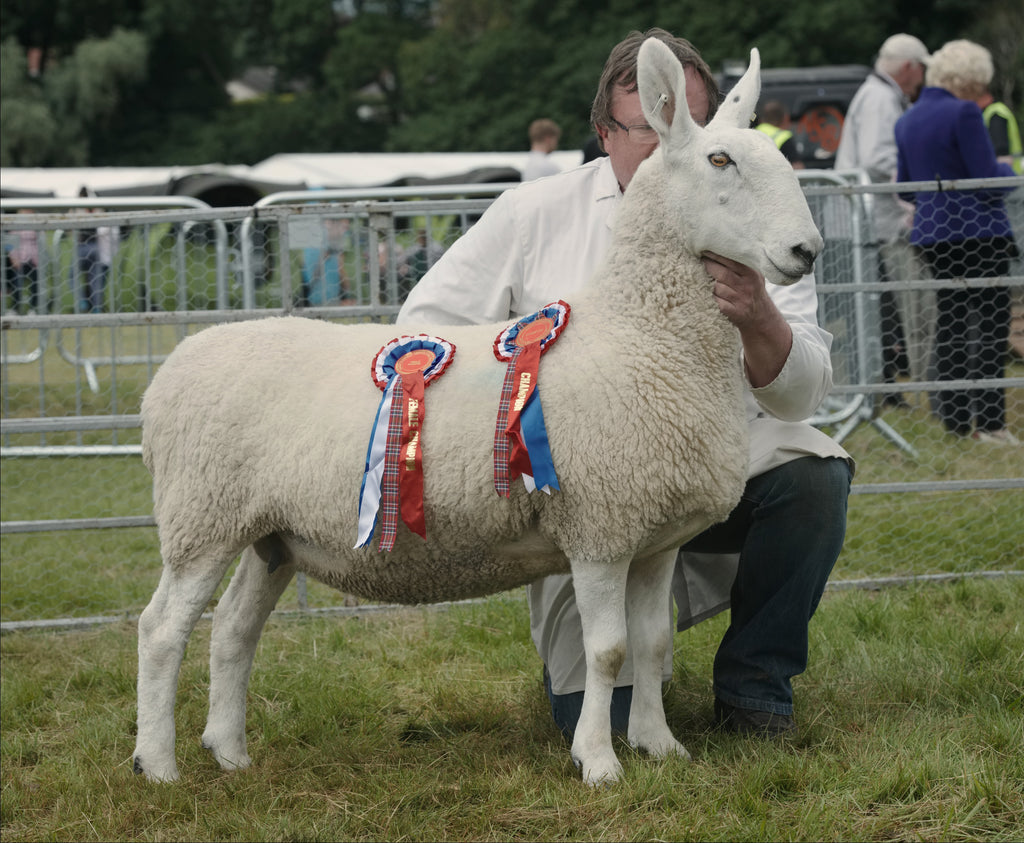 Great Yorkshire Show winner