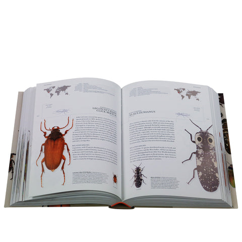 The Book of Beetles - A lifesize guide to six hundred of nature's gems*
