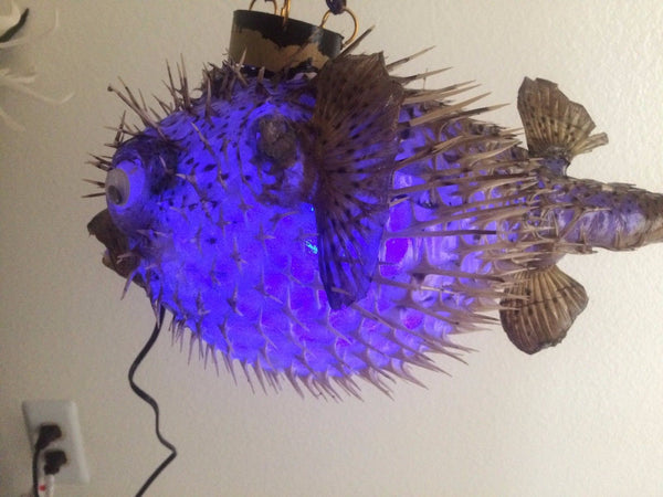"NEW 18"" Puffer Fish Lamp w/color changing LED Light Tiki bar Smokin Tikis 120"