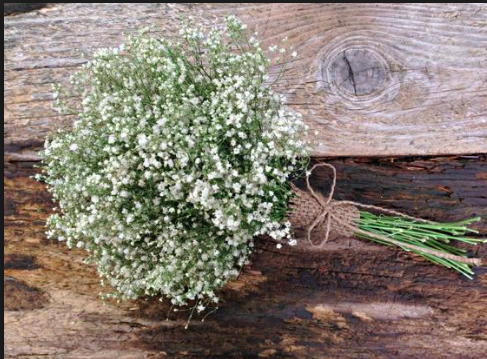 Baby Breath Bouquet