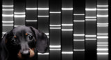Pet Portrait DNA Art on Canvas - Black
