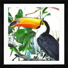 Toucan Paradise Print with Frame