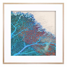 Coral Blue and Red Acrylic Print with Frame