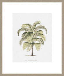 Les Palmiers On White III Framed Print