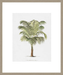Les Palmiers On White II Framed Print