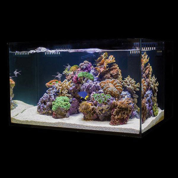C-Vue All-In-One Aquariums - AIO 18 gallon
