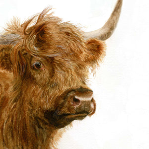 Highland Cow window range - Rogerleeart