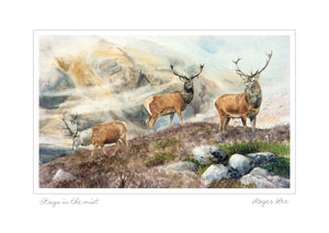 Stags in the mist, Landscape Range - Rogerleeart