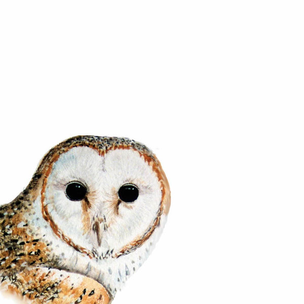 Barn Owl (window range) - Rogerleeart