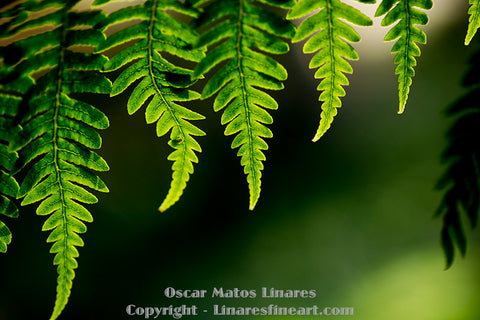 Edges of the Ferns