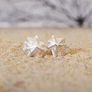 Limpet Shell Studs
