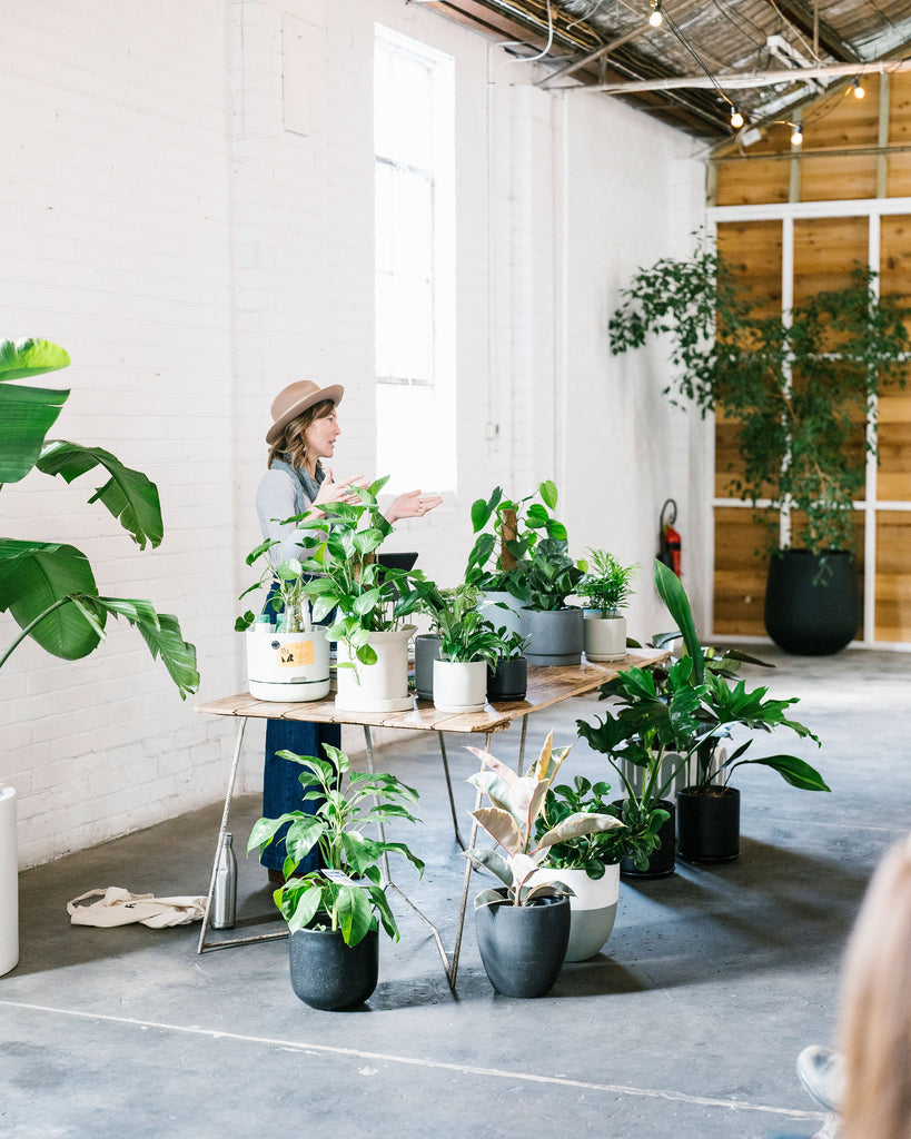 Indoor Plant Knowhow with Claire Greenhill