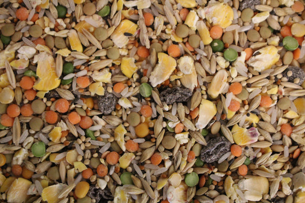 Soak Mix | Exotic Bird Seed - Feathered Friends of Santa Fe (www.ffofsf.com)