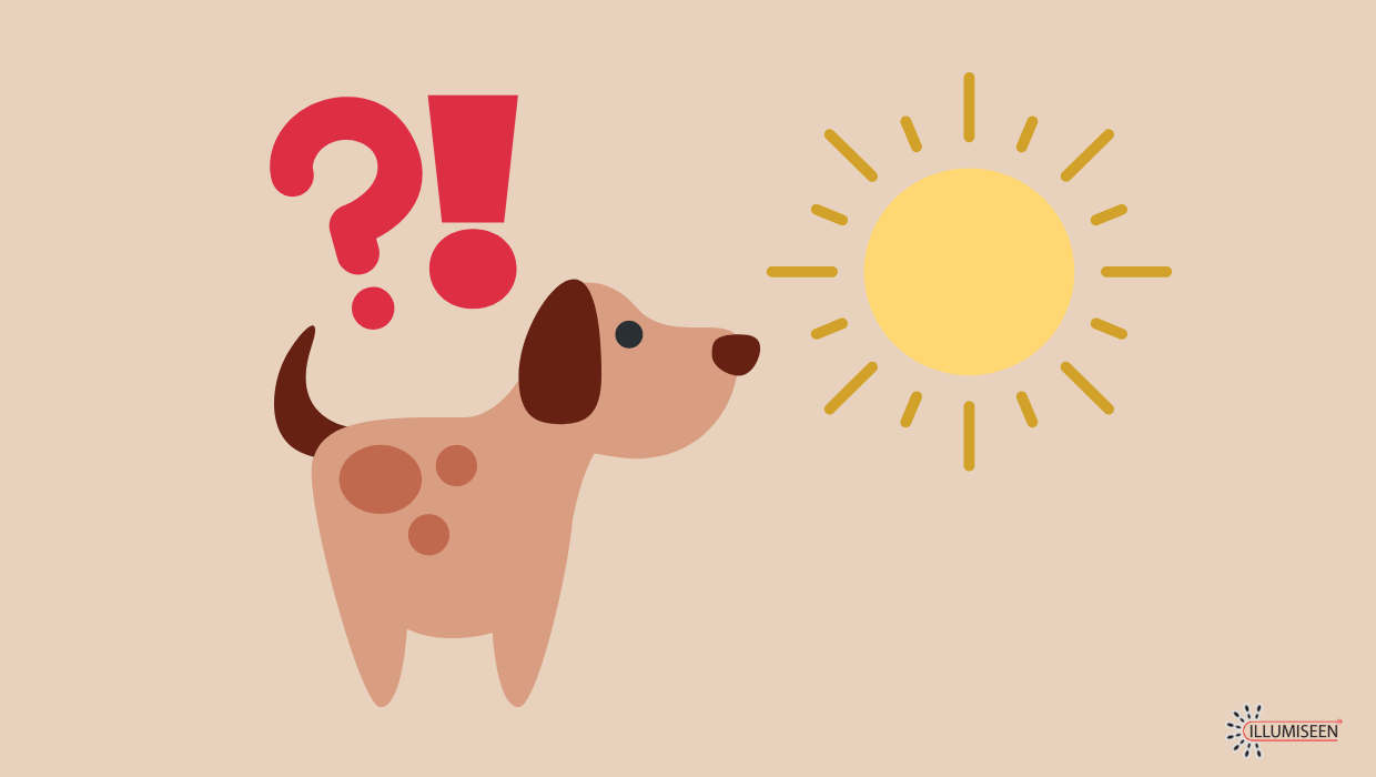 Beware the Sun: Heatstroke in Dogs – What to Do and How to Prevent It