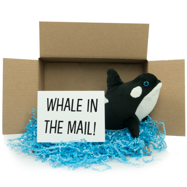 Whale In The Mail!