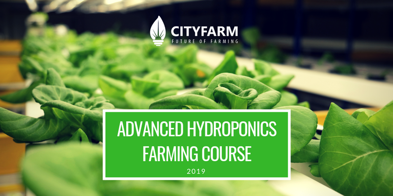 Hydroponics Farming Course with FREE Farm Set (May 2019) - CityFarm