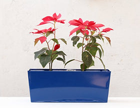 Green Gardenia Table Top Rectangular Planter Dark Blue | SpreeIndia.com - India's First Website That Discovers Eco-Friendly Products