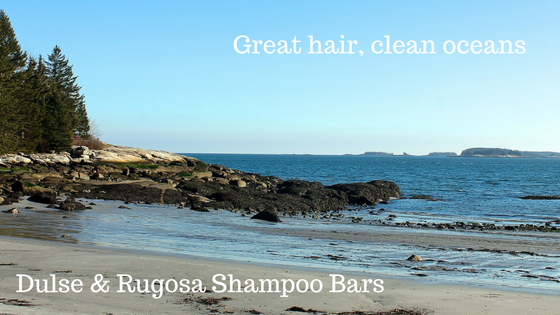 Seaweed Shampoo Bars- Great Hair, Clean Oceans