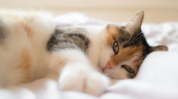 How To Pick The Best Bed For Your Cat