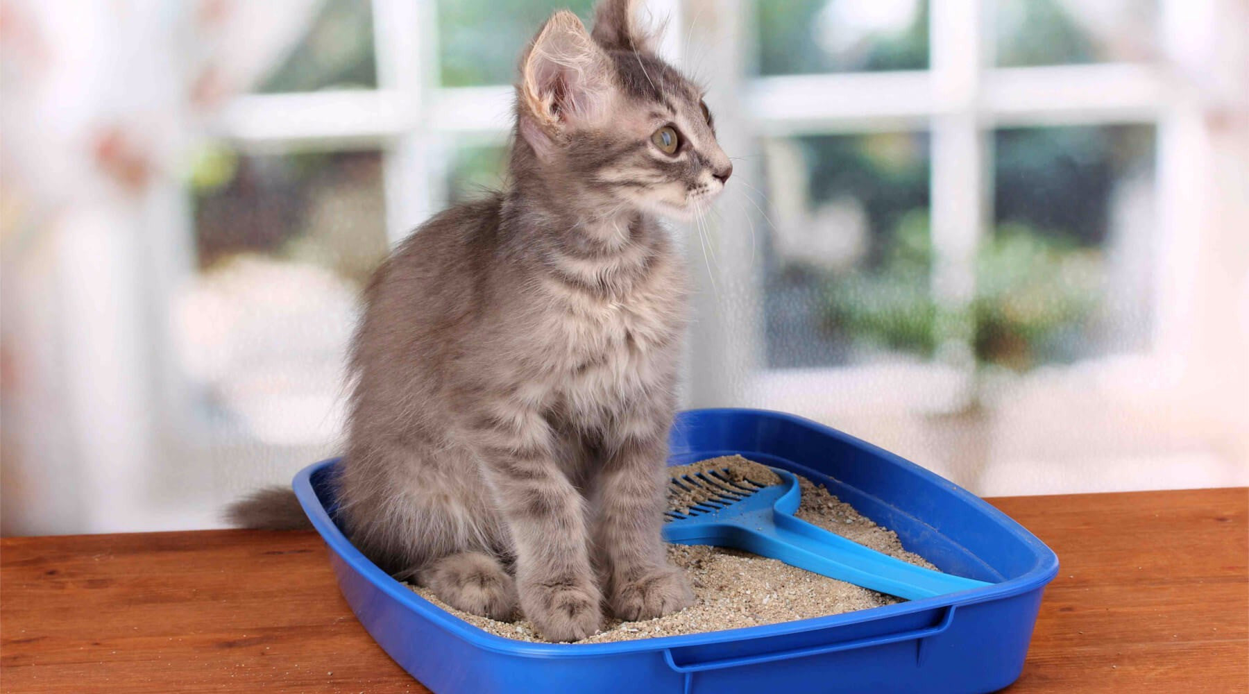 Remove Stinky Cat Litter Odors With These 4 Simple Solutions