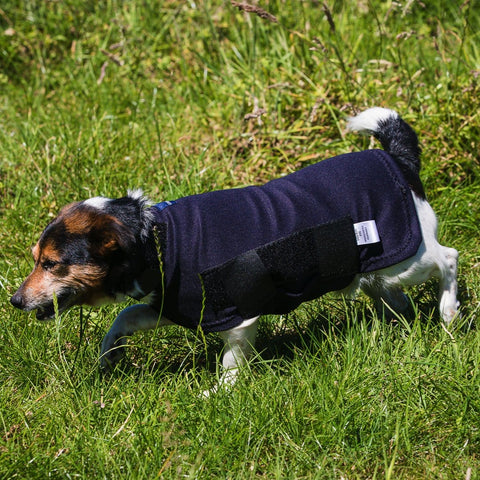 products/dogs_coat.jpg