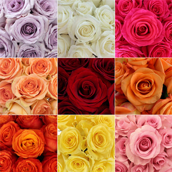 Budget Wholesale Bulk Roses for Your Wedding - Bouquets - Centerpieces - Cost Less - Order Online Ship to Your Door - DYI