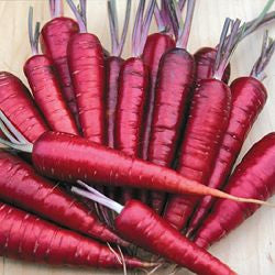 Purple Dragon Carrot (300 seeds)
