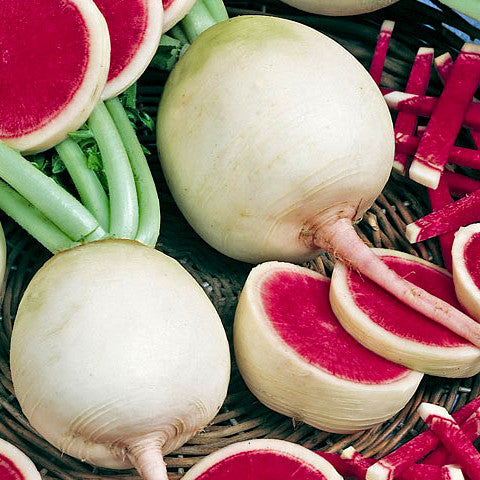 Watermelon Radish Seeds (200+ seeds) Heirloom NonGMO - USA Grown