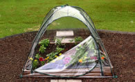 Single Bed Clear Garden Cover