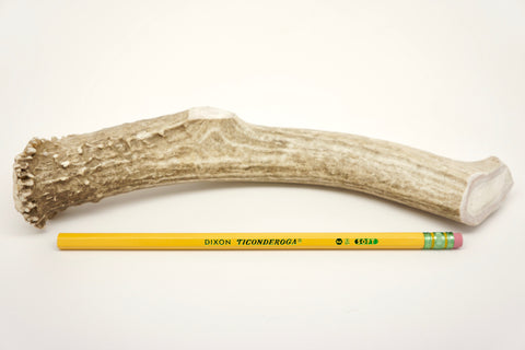 RidgeRunner Extra Large Deer Antler Bones for Dogs