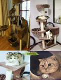 ddhouse singapore online pet supply Large Size cat Tree