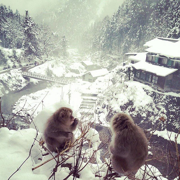Nozawa Onsen's Winter Secrets - A 3-Day Tour