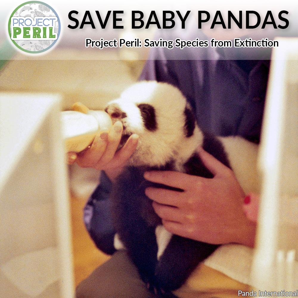 Donation - Project Peril: Help Feed Baby Pandas