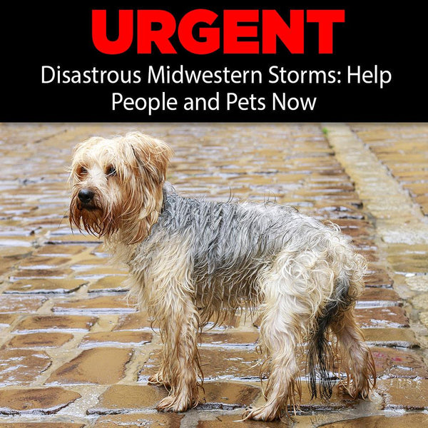 Donation - Disastrous Midwestern Storms: Help People And Pets Now