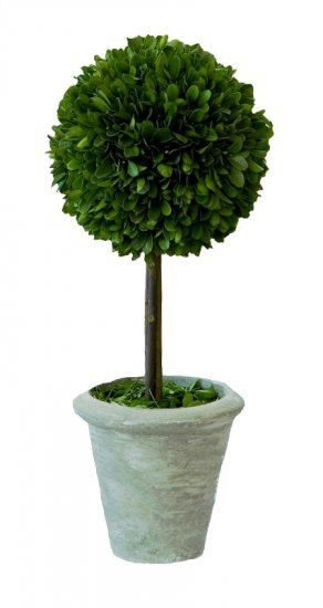 Mills Floral Large Preserved Boxwood Ball on Stem Topiary Set - Life onPlum