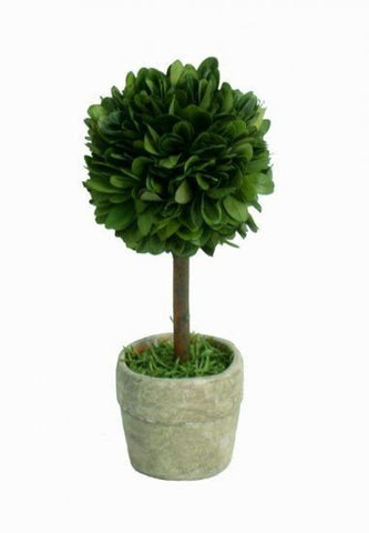 Mills Floral Mini Preserved Boxwood Ball on Stem Topiary - Life onPlum - 1