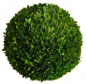 Mills Floral Preserved Boxwood 12-inch Ball Life on Plum