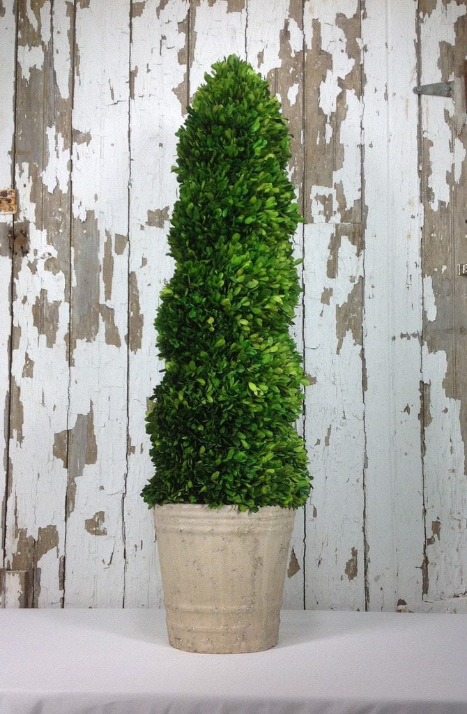 Mills Floral Preserved Boxwood 51-inch Spiral Topiary Life on Plum