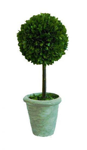 Image of Mills Floral Small Preserved Single Ball on Stem Boxwood Topiary Set Life on Plum