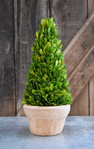 Mills Floral Preserved Boxwood 11-inch Cone Topiary