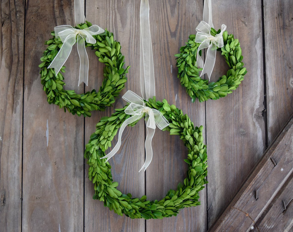 Mills Floral Preserved Boxwood Round Wreath Set with Ribbon