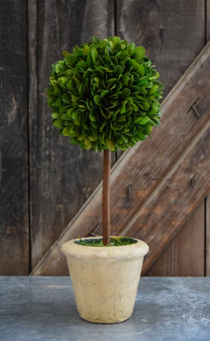 Image of Mills Floral Small Preserved Single Ball on Stem Boxwood Topiary