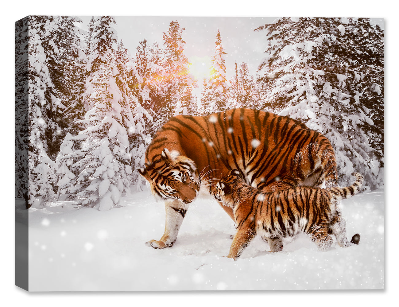 Tiger & Cub in the Snow