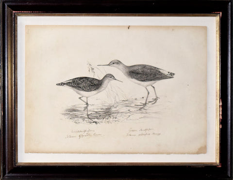 "John Gould (1804-1881), ""Wood and Green Sandpipers"""