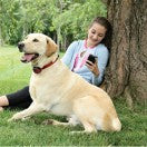 PetSafe Stubborn Dog Wireless Receiver Collar (PIF00-13672) - Countryside Pet Supply - 3