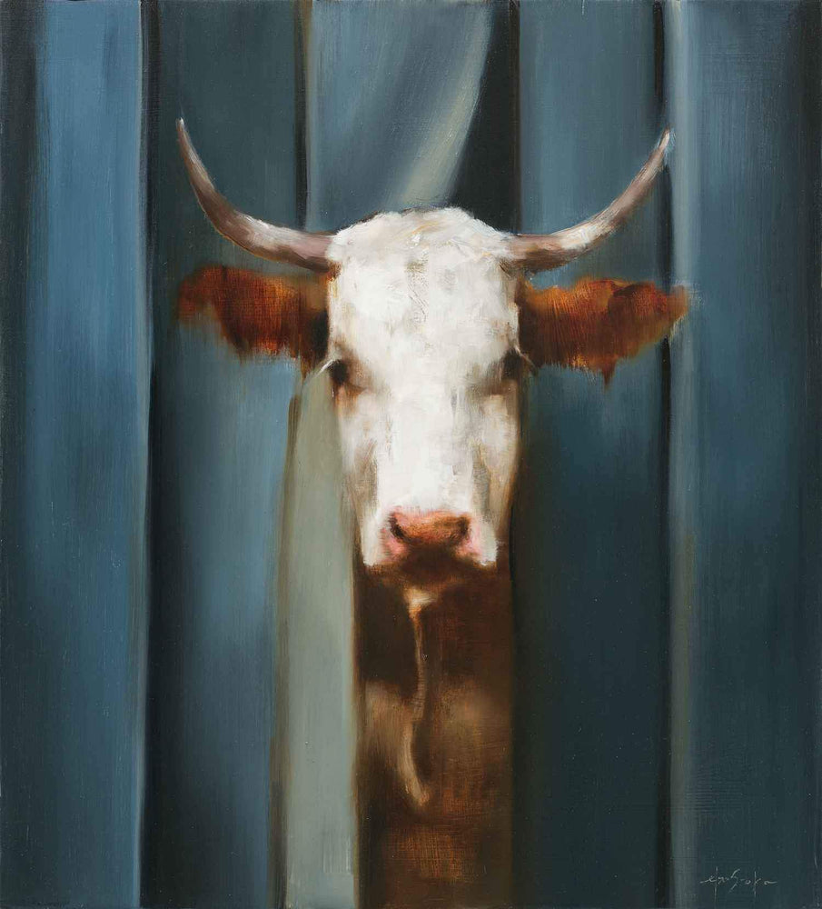"Painting of a cow looking out from behind curtains. Oil Painting by Elsa Sroka.  18"" x 20"""