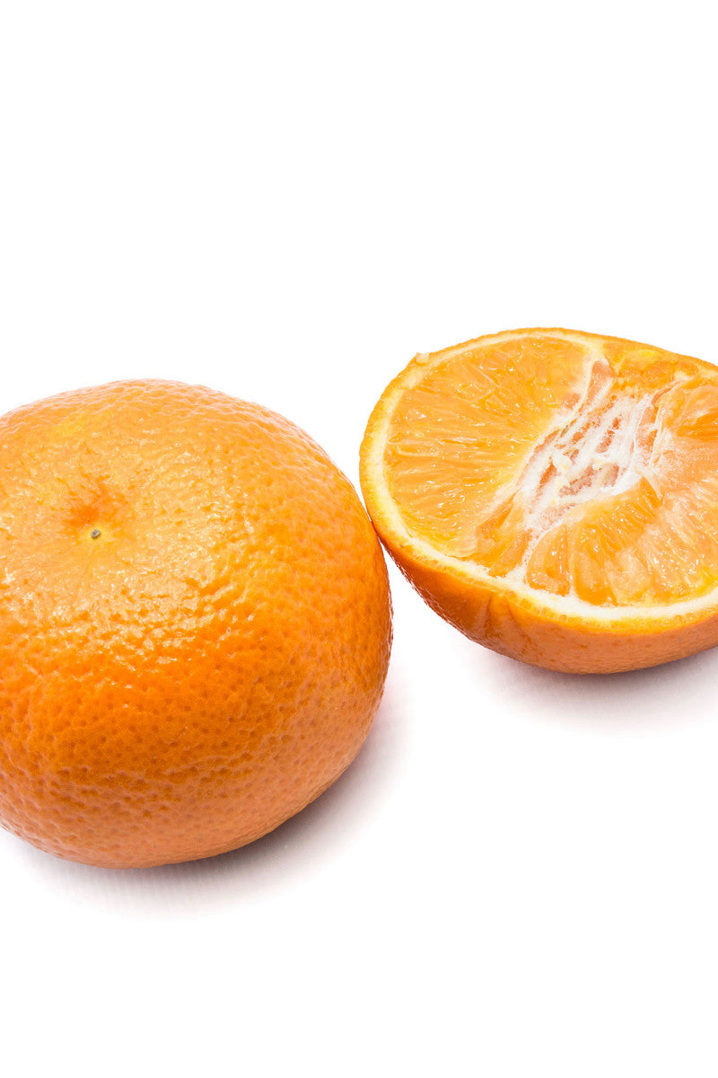 Fina Sodea Tree, Seedless Clementine Mandarin Citrus (Excludes: CA,TX,LA,AZ)