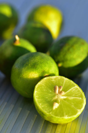 Key Lime Tree, Ever Bearing Citrus (Excludes: CA,TX,LA,AZ)
